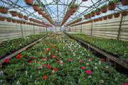 About Greenhills Nursery Ltd and Plants and Trees Nursery In UK